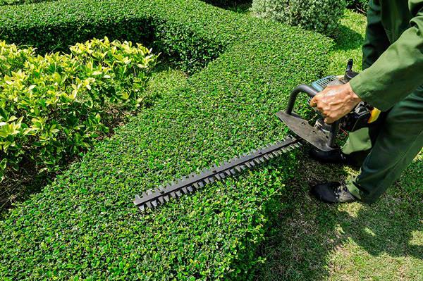 shrub-care